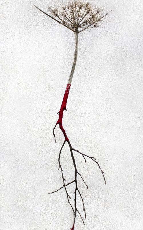 """""""Un solo fiore al mondo"""", copyright Ilaria Margutti"""