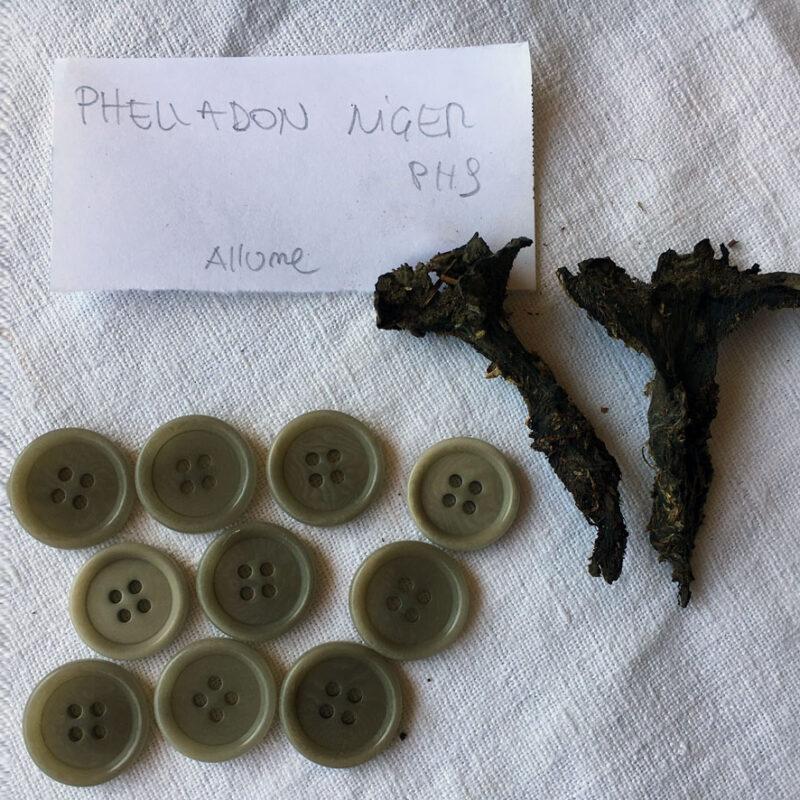 Associazione Casa Clementina, funghi e licheni